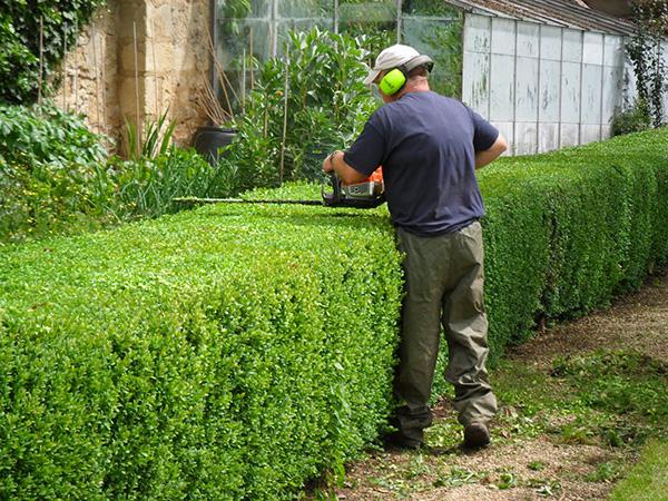 Заказать услуги по стрижке живых изгородей